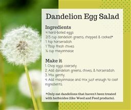 Photo of Edible Weeds - Dandelion Egg Salad Recipe